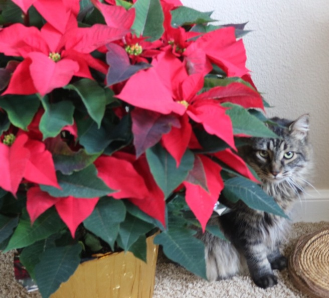 max-and-the-pointsettia